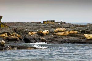 Wild Seals (@photographer)
